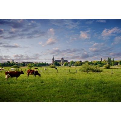 fsdb1011 Lente Koeien