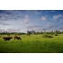 fsdb1011 Bosch landschap (te bestellen)